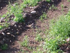 killdeer2 on nest 002