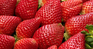 LCDA - Strawberry Festival